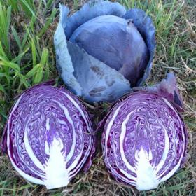 Cabbage Remala