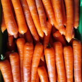 Carrot Champion