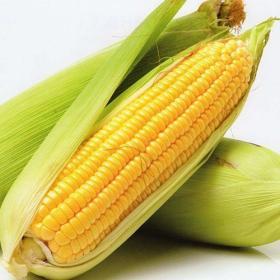 Sweet corn GSS-5649